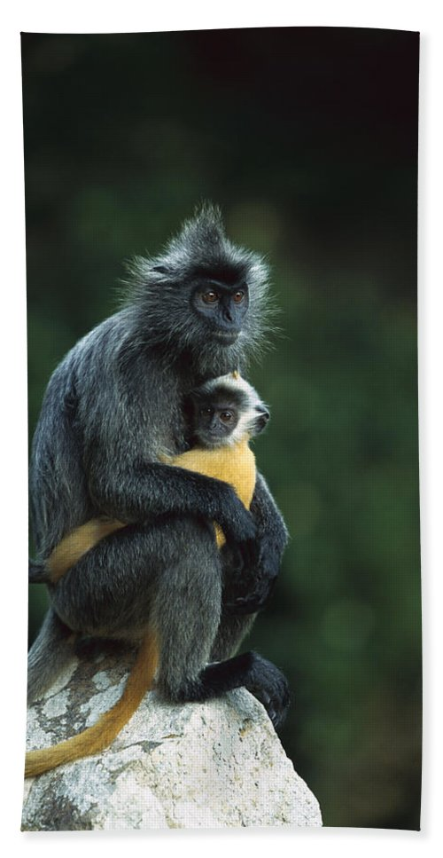 00620192 Hand Towel featuring the photograph Silvered Leaf Monkey And Baby by Cyril Ruoso