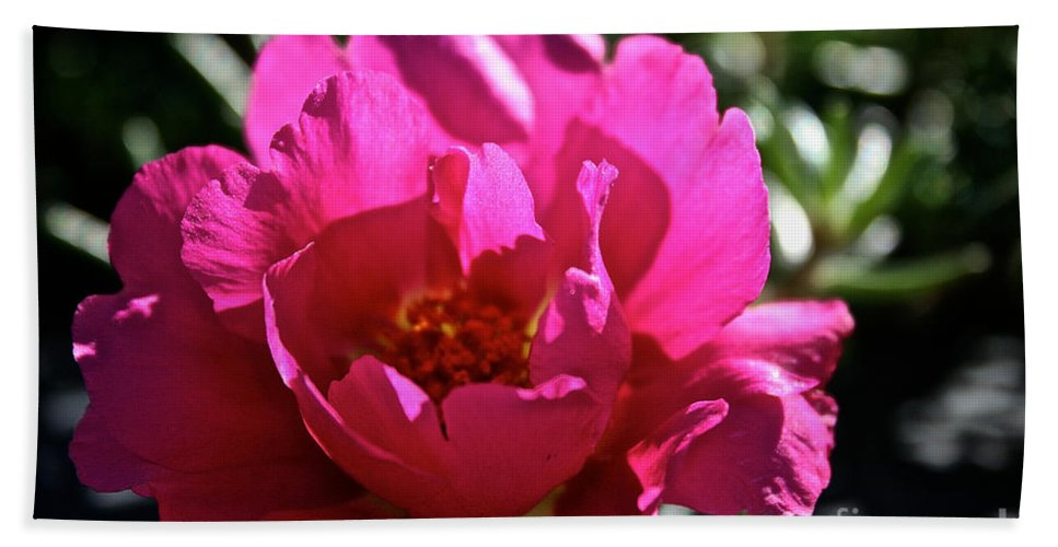 Plant Hand Towel featuring the photograph Simple Rose by Susan Herber