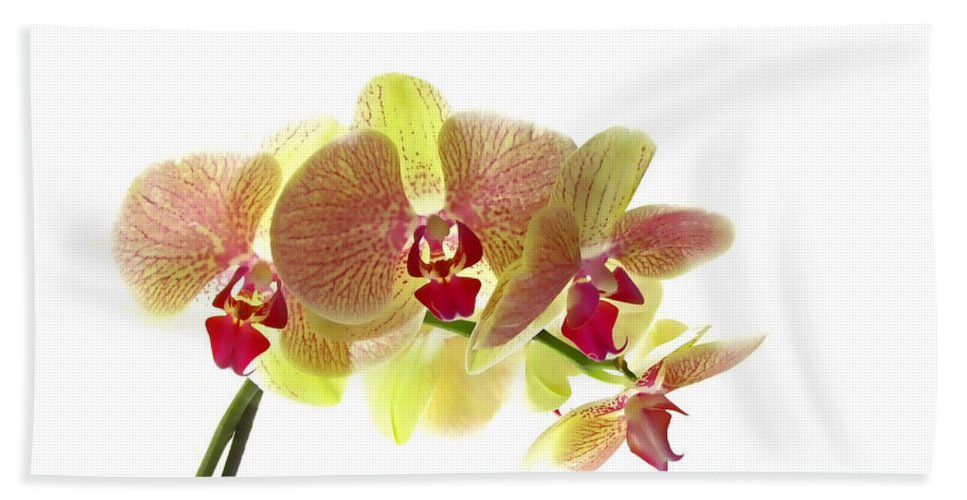 Nature Bath Sheet featuring the photograph Simplified Orchids I by Debbie Portwood