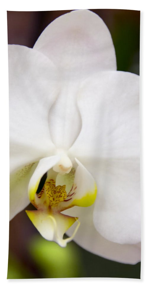 Exotic Hand Towel featuring the photograph Simply Pure Orchid by Angelina Tamez