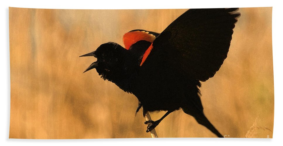 Red-winged Blackbird Hand Towel featuring the photograph Singing At Sunset by Betty LaRue