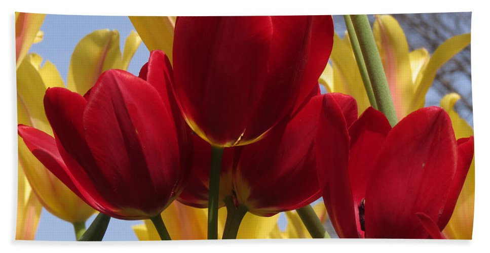 Tulip Bath Sheet featuring the photograph Single Late Red Georgette by Darleen Stry