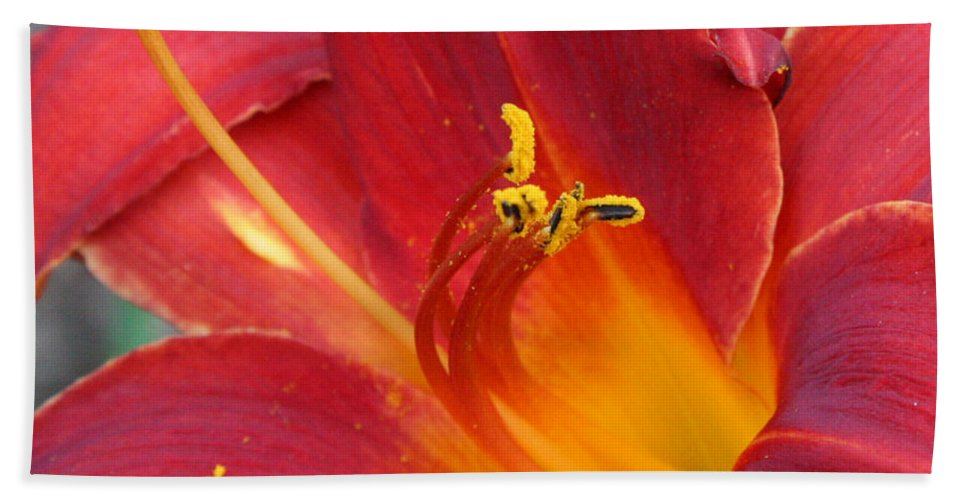 Floral Hand Towel featuring the photograph Single Red Lily 2 by Donna Corless