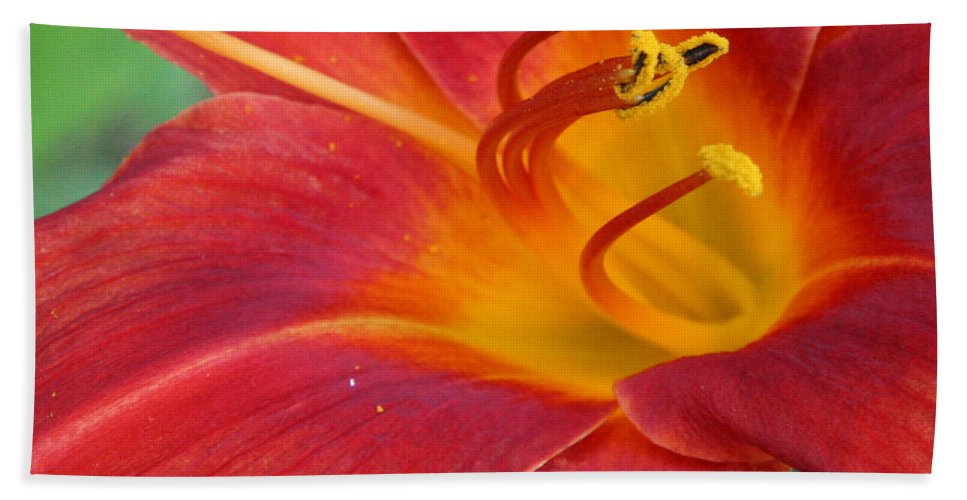 Floral Hand Towel featuring the photograph Single Red Lily Closeup by Donna Corless