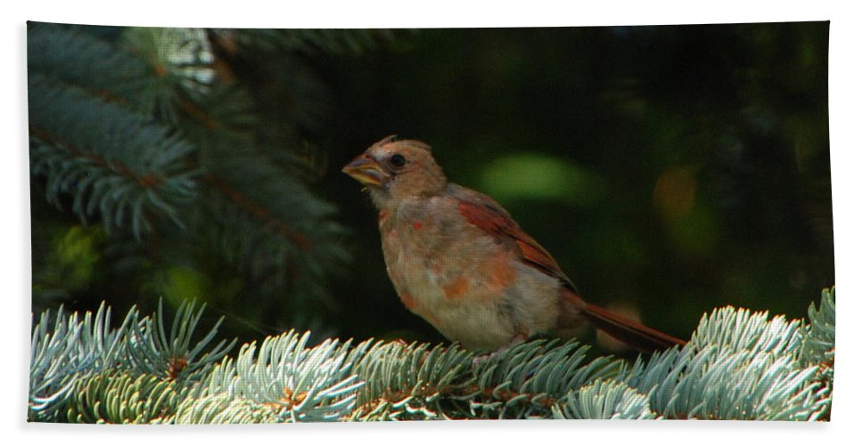 Bird Bath Sheet featuring the photograph Sitting Pretty by Grace Grogan