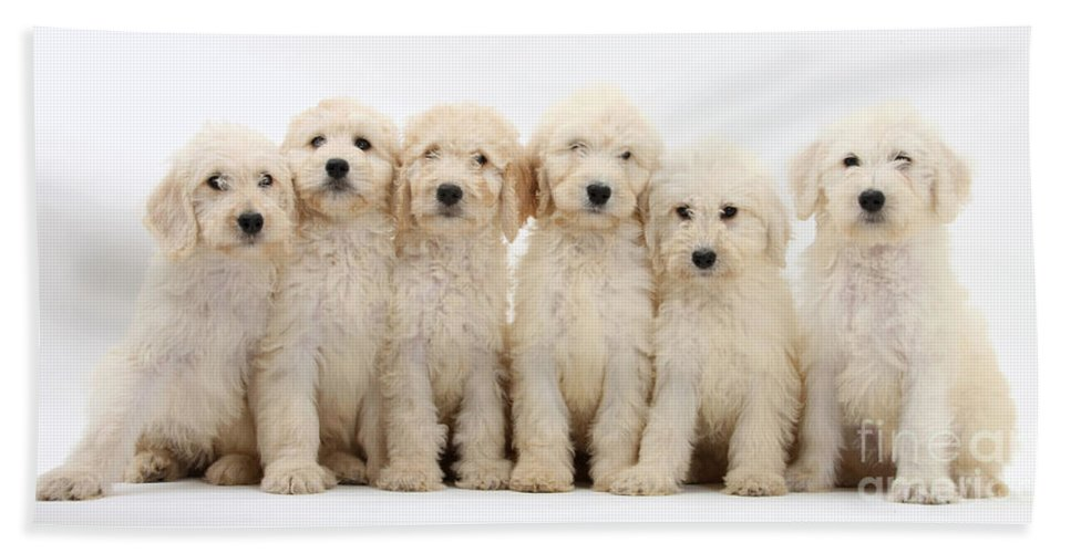 Animal Hand Towel featuring the photograph Six Labradoodle Pups by Mark Taylor