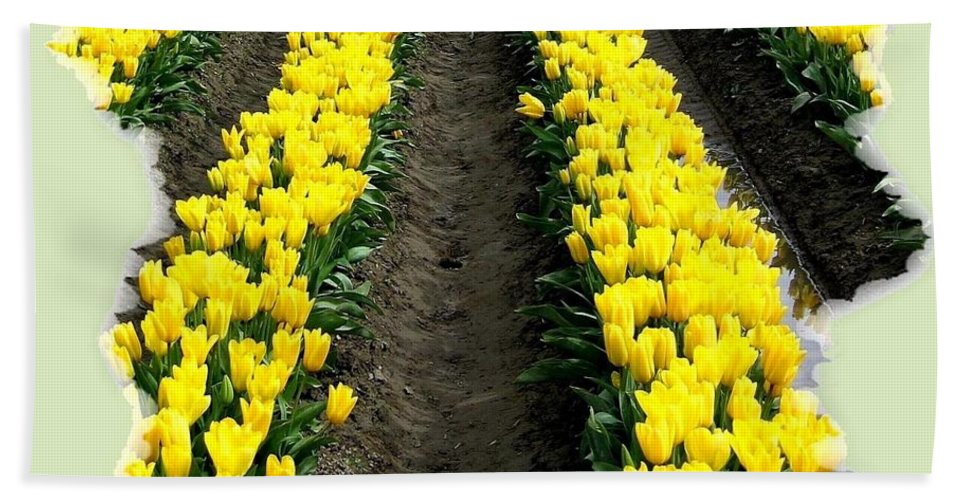 Tulips Hand Towel featuring the photograph Skagit Valley Tulips 2 by Will Borden