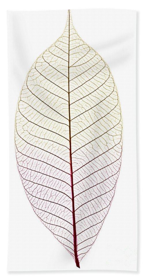Skeleton Hand Towel featuring the photograph Skeleton Leaf by Elena Elisseeva