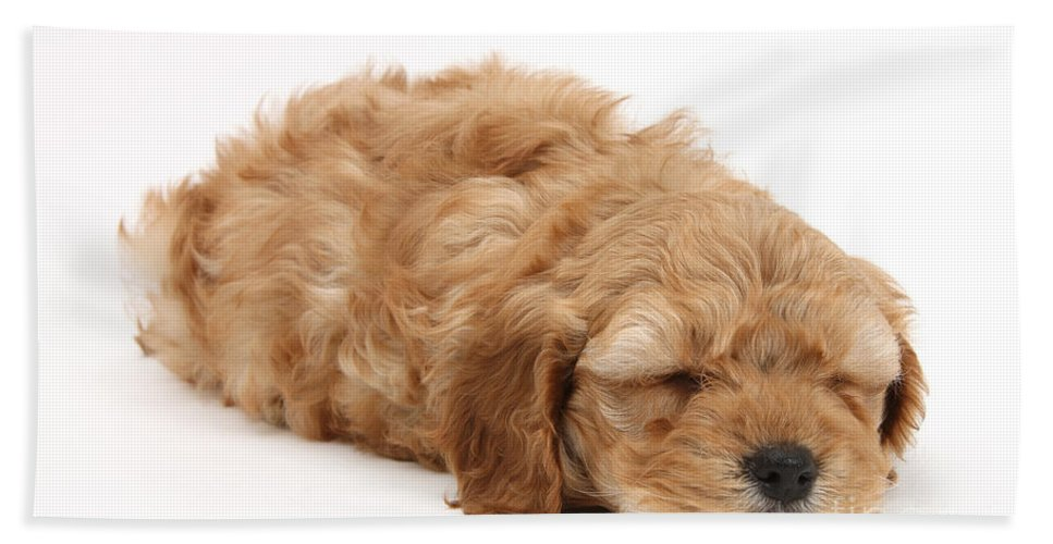 Animal Hand Towel featuring the photograph Sleeping Cockerpoo Puppy by Mark Taylor