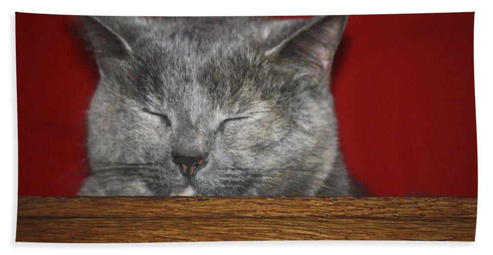 Cat Bath Sheet featuring the photograph Sleeping Pixie by Teresa Mucha