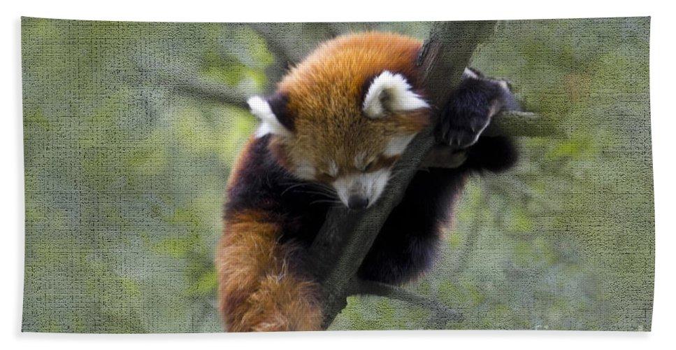 Nature Bath Sheet featuring the photograph sleeping Small Panda by Heiko Koehrer-Wagner