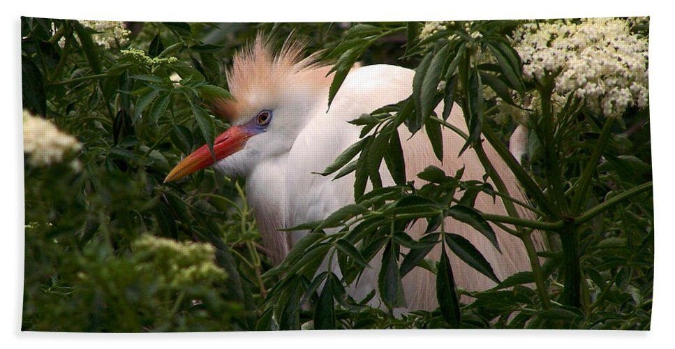 Nature Bath Sheet featuring the photograph Sleepy Egret In Elderberry by Peg Urban