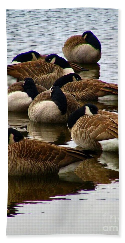 Goose Hand Towel featuring the photograph Sleepy Geese by Art Dingo