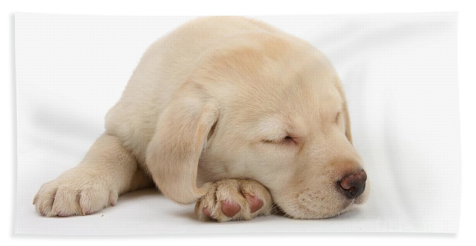 Animal Hand Towel featuring the photograph Sleepy Labrador Pup by Mark Taylor