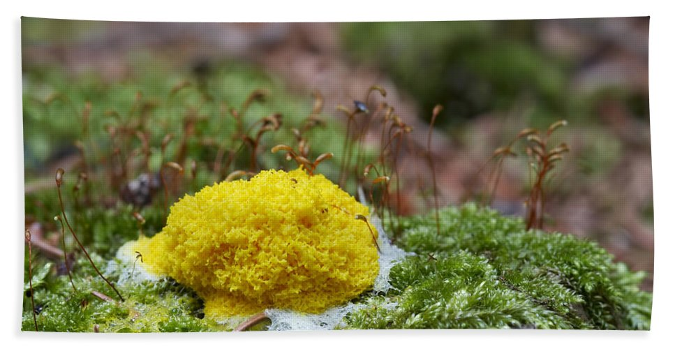 Slime Mould Bath Sheet featuring the photograph Slime Mould by Michal Boubin