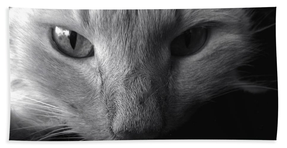 Cat Hand Towel featuring the photograph Sly by Art Dingo