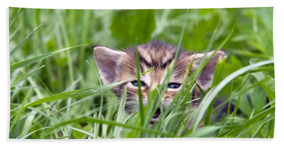 Adorable Hand Towel featuring the photograph Small Kitten In The Grass by Michal Boubin