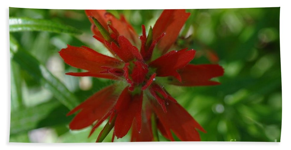 Flower Hand Towel featuring the photograph Small Red Wildflower by Jeff Swan