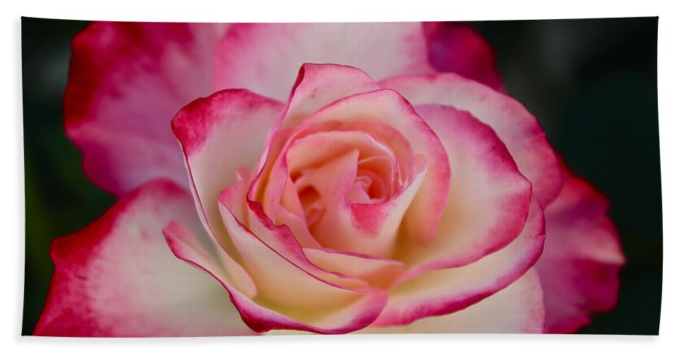 Flowers Bath Sheet featuring the photograph Smell The Roses by Diana Hatcher