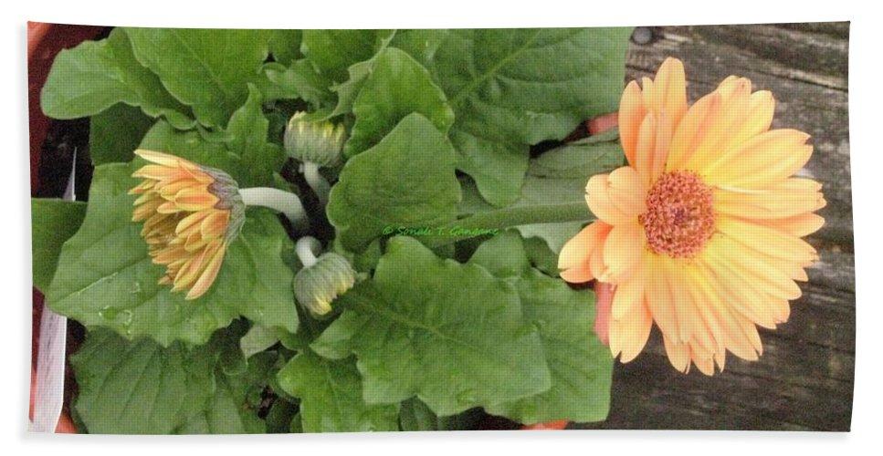 Orange Zerbera Hand Towel featuring the photograph Smiling Orange Zerbera Flower by Sonali Gangane