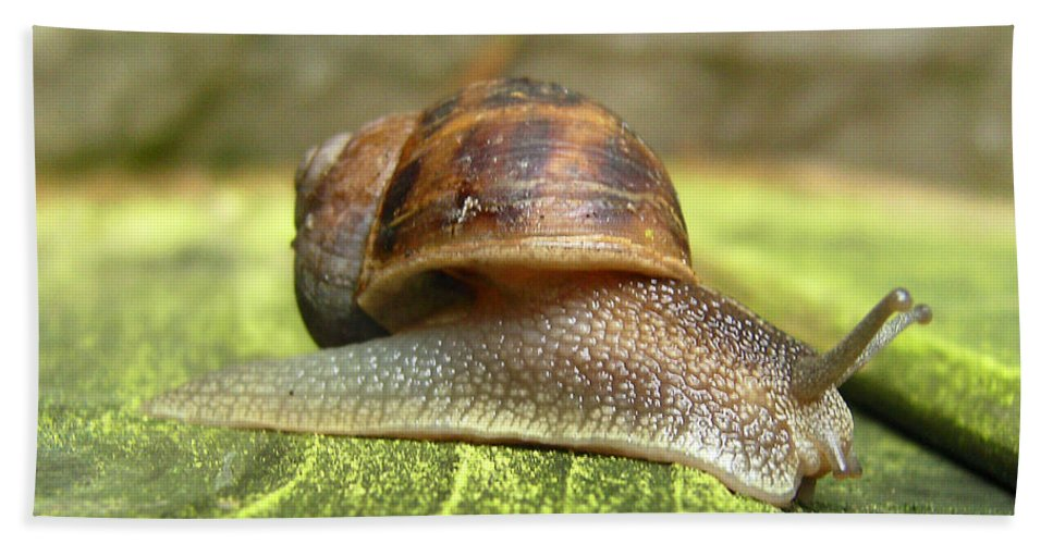 Snail Bath Sheet featuring the photograph Snail by Chris Day