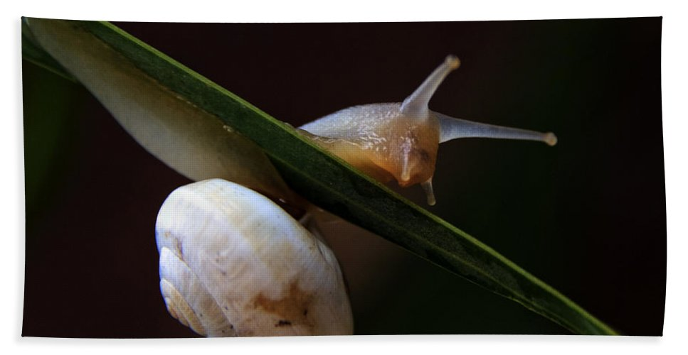 Animal Hand Towel featuring the photograph Snail by Stelios Kleanthous
