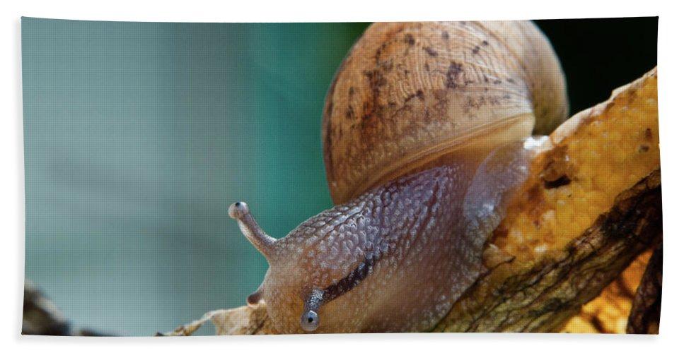Snail Bath Sheet featuring the photograph Snail Traversing by Greg Nyquist