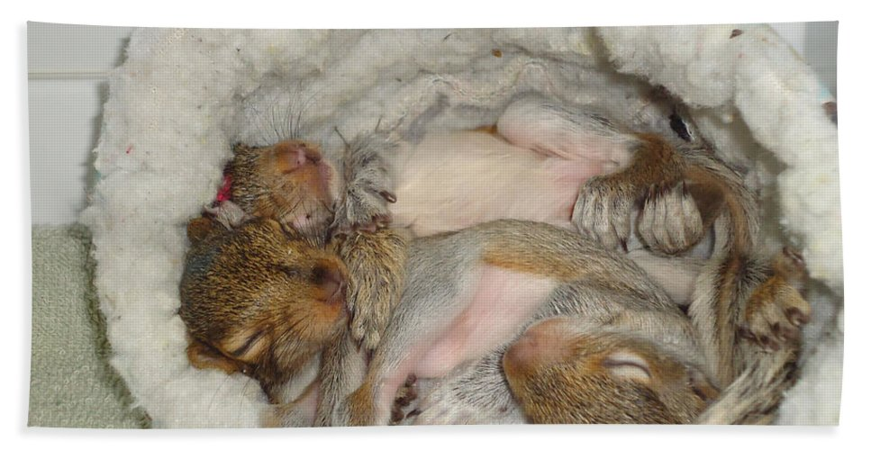 Baby Hand Towel featuring the photograph Snoozers by Art Dingo