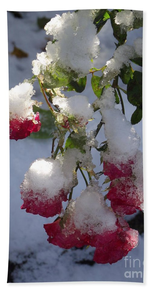 Winter Scene Bath Sheet featuring the photograph Snow Covered Roses by Michelle Welles