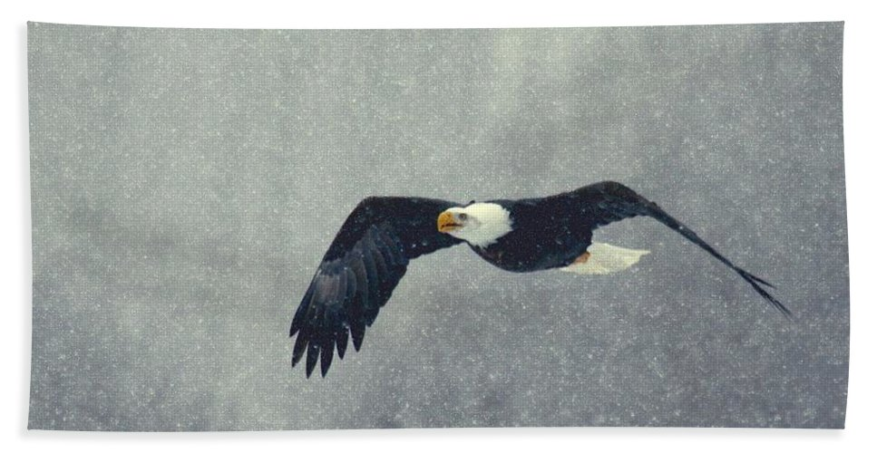 Eagle bald Eagle Birds Nature birds In Flight Hand Towel featuring the photograph Snow Flight by Myrna Bradshaw