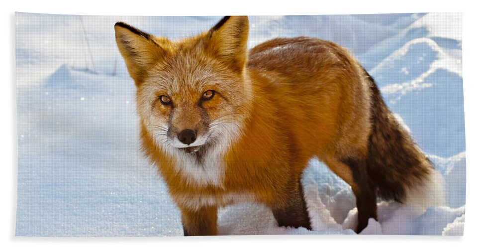 Red Bath Sheet featuring the photograph Snow Fox by Beth Riser