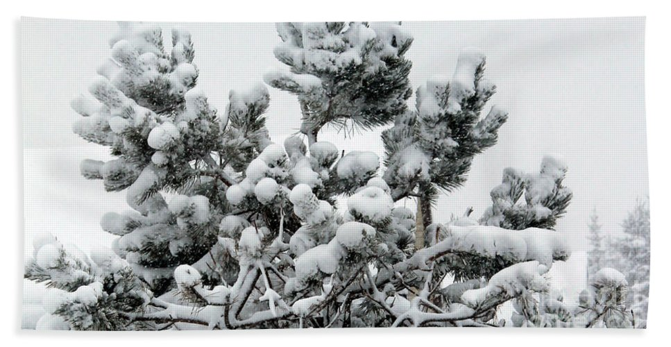 Snow Bath Sheet featuring the photograph Snow On The Pines by Barbara Griffin