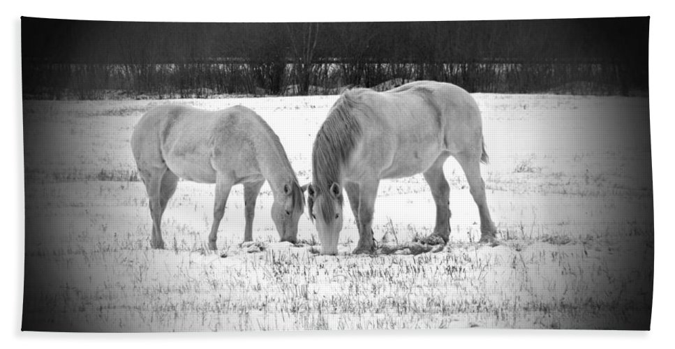 Animal Photograph Bath Sheet featuring the photograph Snow White Beauties by Ms Judi