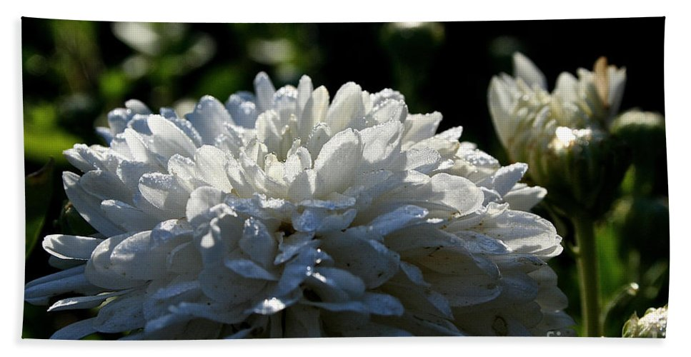 Outdoors Hand Towel featuring the photograph Snowball Dahlia by Susan Herber