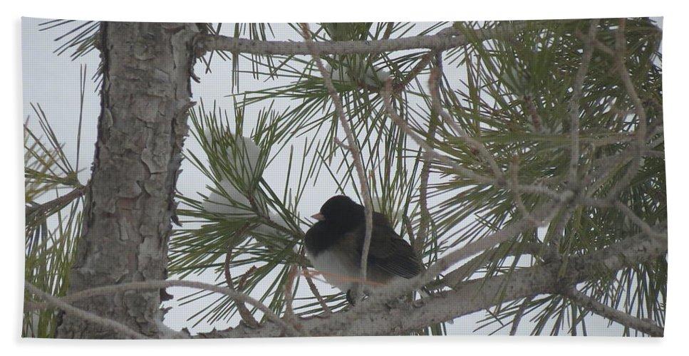 Aimee Mouw Bath Sheet featuring the photograph Snowbird by Aimee Mouw