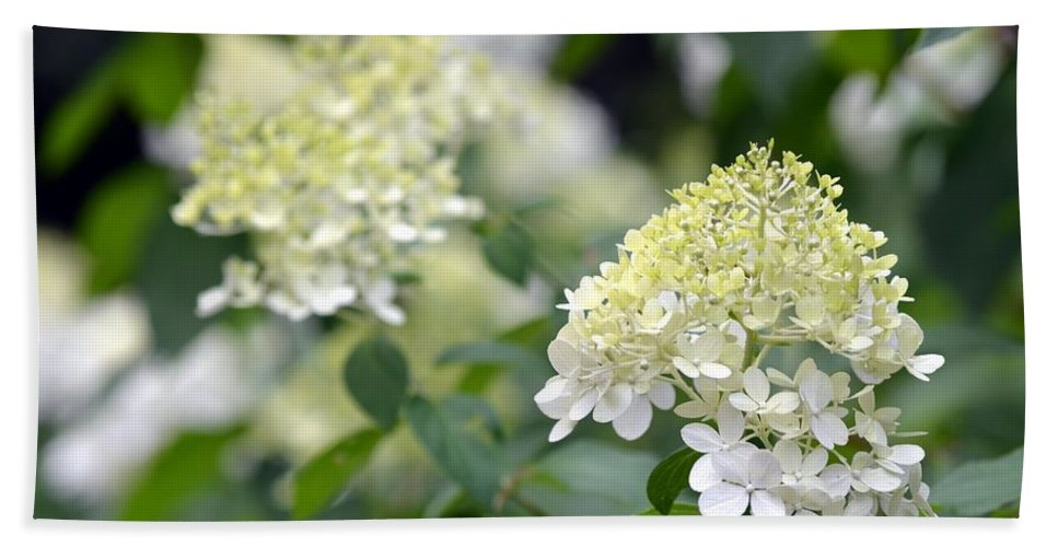 Snowflake Hand Towel featuring the photograph Snowflake Hydrangea 2 by Maria Urso