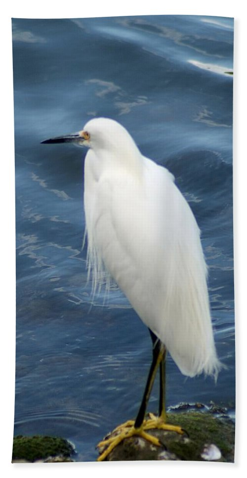 Snowy Bath Sheet featuring the photograph Snowy Egret 1 by Joe Faherty