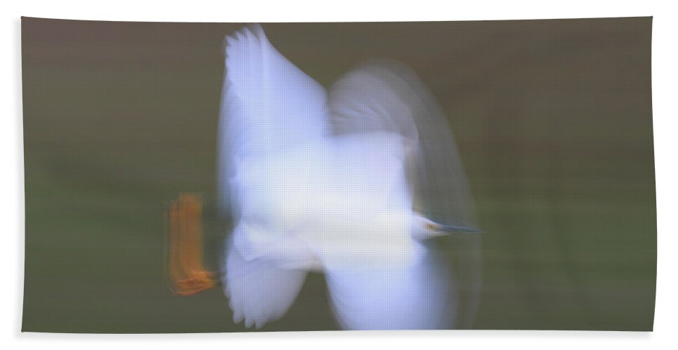 Mp Hand Towel featuring the photograph Snowy Egret Egretta Thula Flying by Scott Leslie