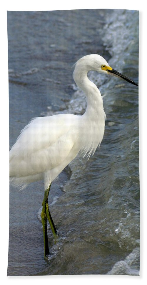 Snowy Egret Hand Towel featuring the photograph Snowy Egret by Larry Allan