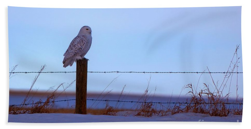 Snowy Owl Bath Sheet featuring the photograph Snowy Owl by James Anderson