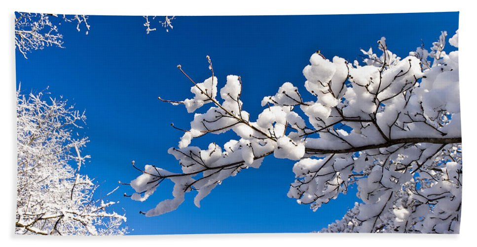 Cold Hand Towel featuring the photograph Snowy Trees And Blue Sky by Lori Coleman