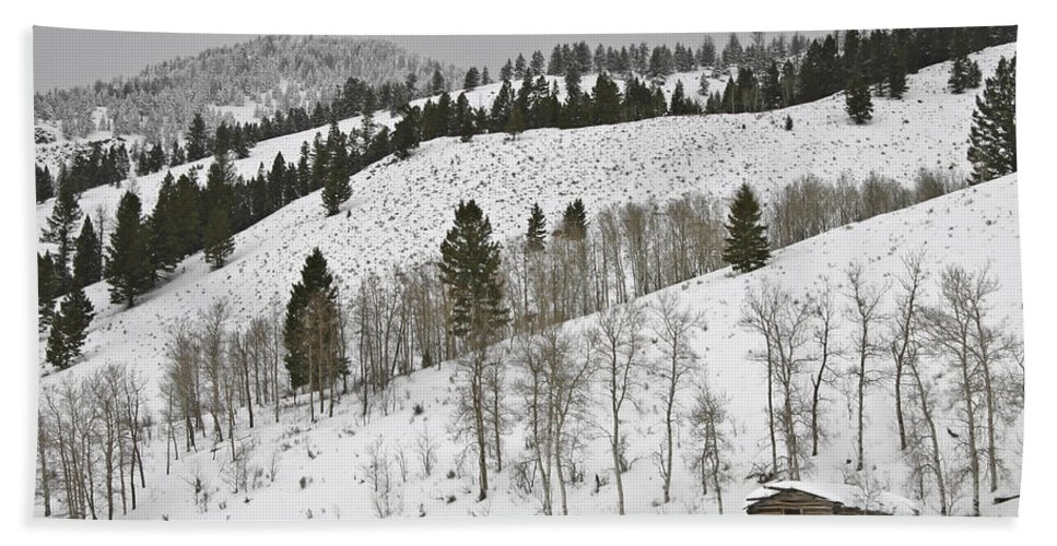 Snowy Wilderness Bath Sheet featuring the photograph Snowy Wilderness by Wes and Dotty Weber
