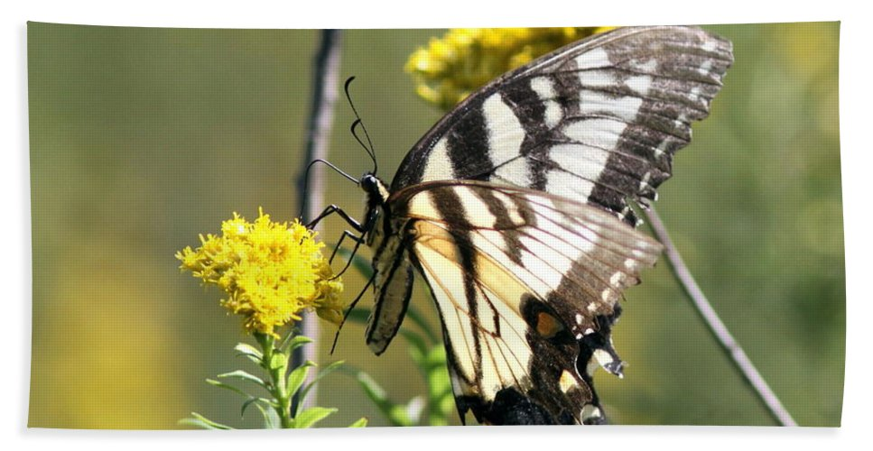 Butterfly Bath Sheet featuring the photograph So Fragile - Butterfly by Travis Truelove