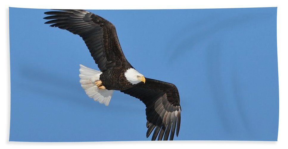 Bald Eagle Hand Towel featuring the photograph Soaring In The Great Blue Yonder by Teresa McGill