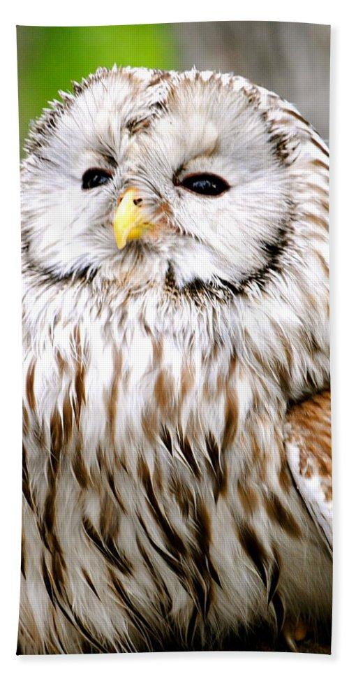 Ural Owl Print Bath Sheet featuring the photograph Soft Beauty by Deborah M Rinaldi