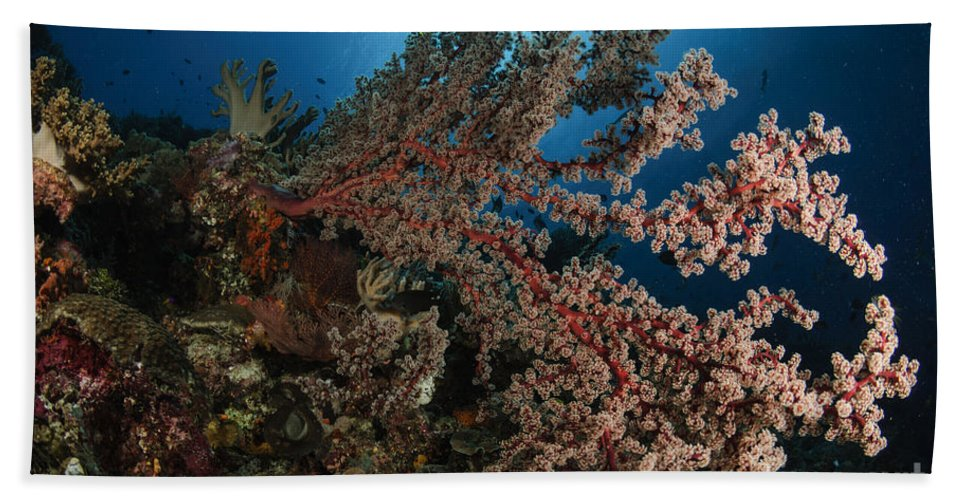 Ocean Hand Towel featuring the photograph Soft Coral Reef Seascape, Indonesia by Todd Winner
