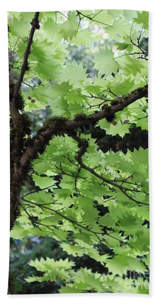 Leaves Bath Sheet featuring the photograph Soft Green Leaves by Carol Groenen
