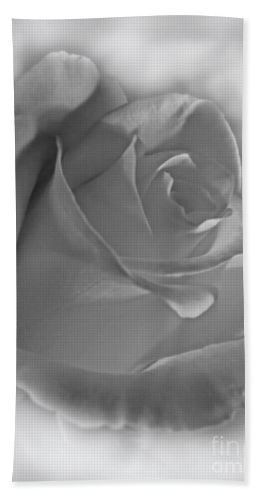 Bath Sheet featuring the photograph Soft White Rose by Debbie Portwood