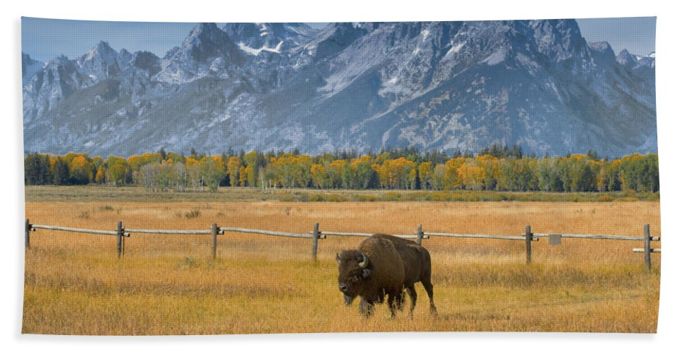 Grand Teton Bath Sheet featuring the photograph Solitary Moments by Sandra Bronstein