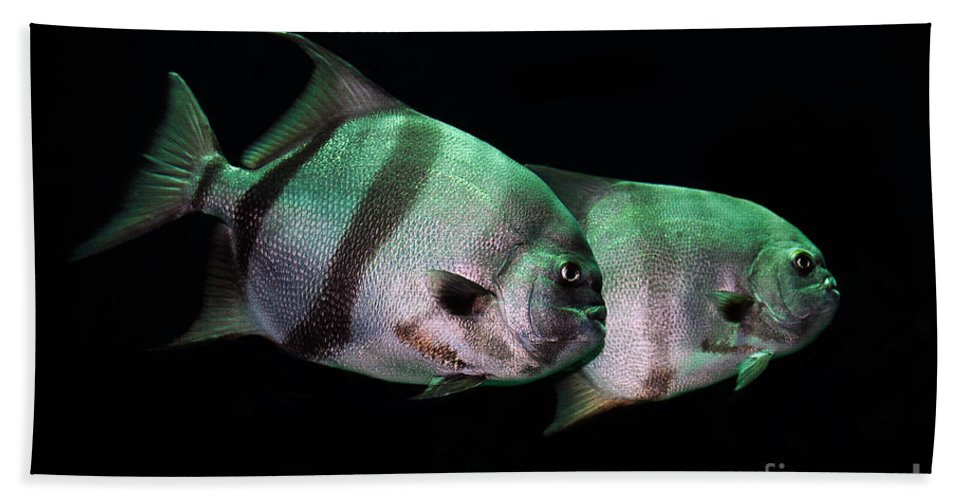 Fish Bath Sheet featuring the photograph Something Fishy This Way Comes by Lois Bryan